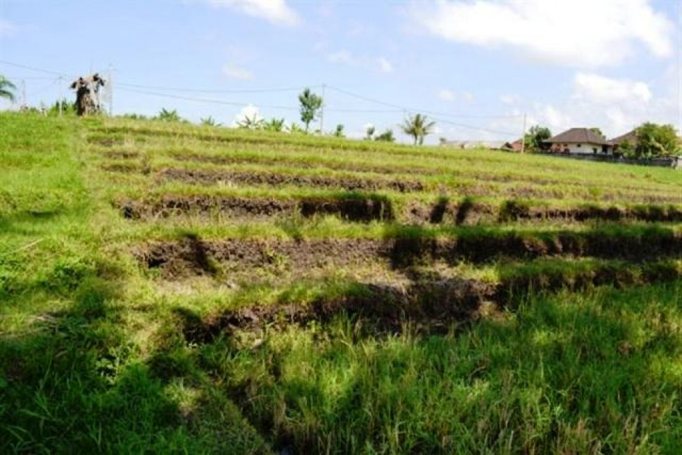 Land for sale in Canggu with Rice field view – TJCG003
