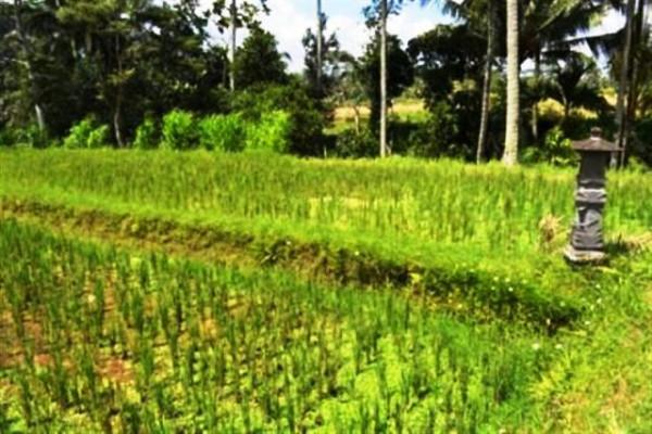 River side land for sale in Ubud – TJUB027