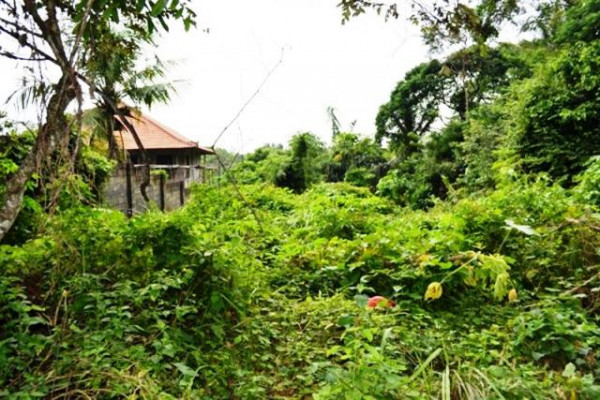 Land for sale in Ubud rice field view – TJUB029