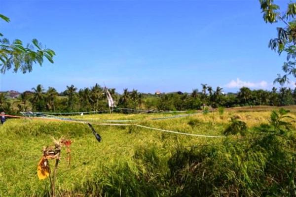 Land for sale in canggu Tumbak bayuh – TJCG034