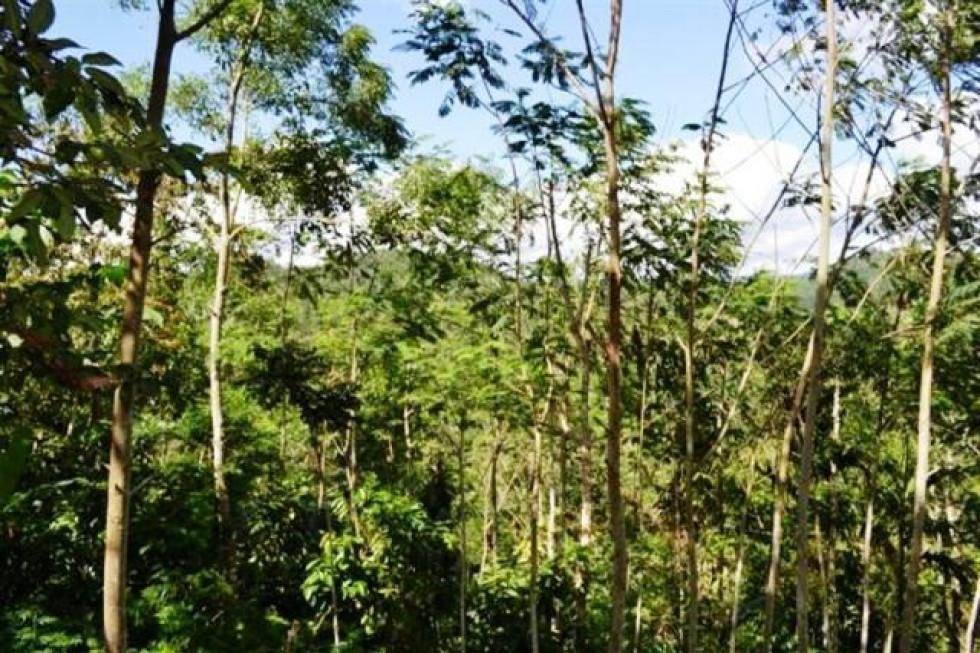 Land for sale in Ubud , 1 Ha Payangan Singaperang – TJUB047