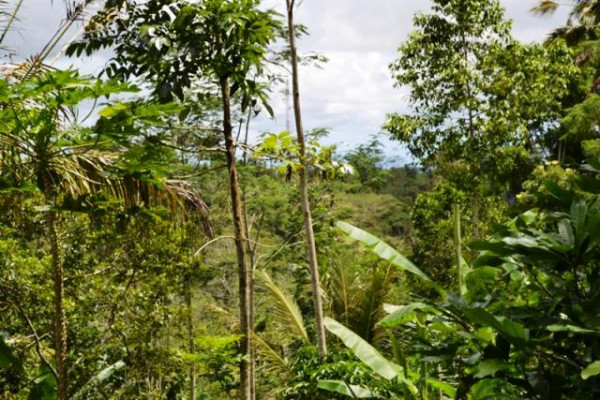 land for sale in Ubud Bali 40 are near elephant park – TJUB059