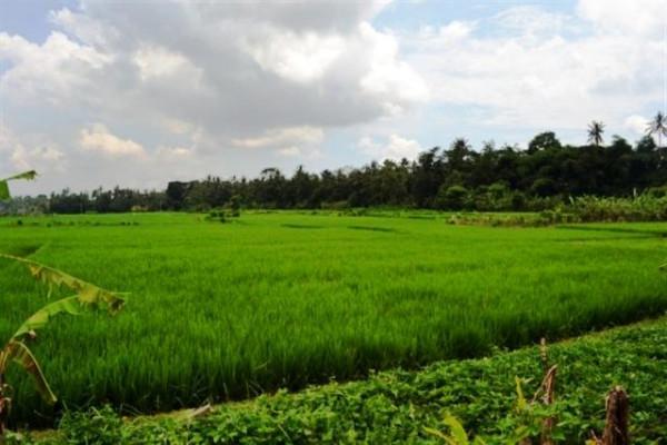 Land for sale in Ubud Bali roadside suitable for restaurant – TJUB067
