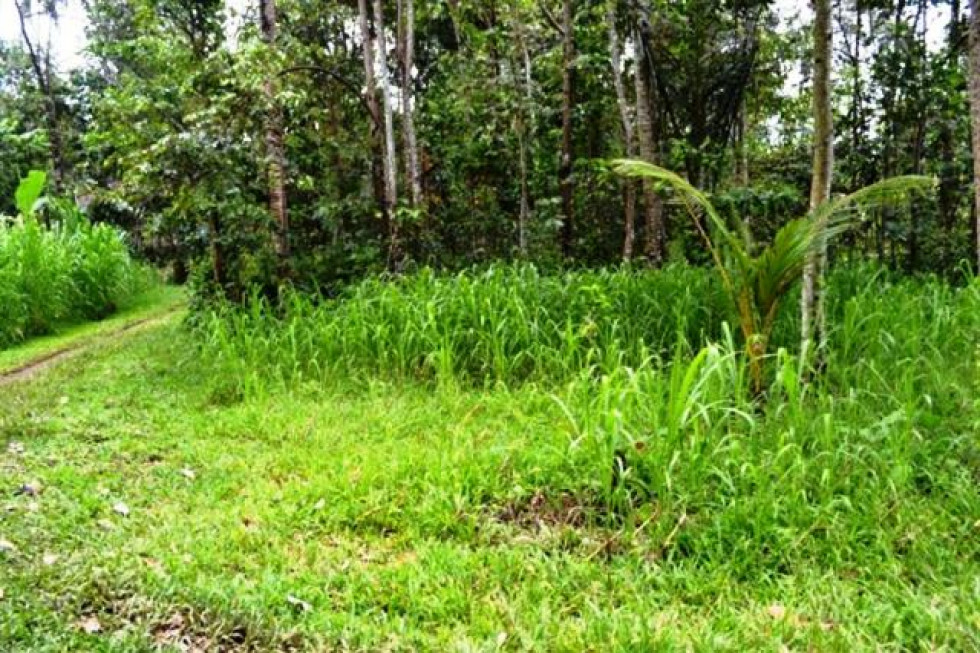 Land For Sale in Ubud Bali Forest View – TJUB069
