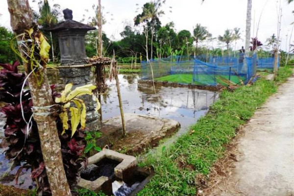 Rice field land for sale in Ubud Bali – TJUB101