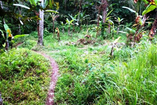 land for sale in Ubud view small river  – TJUB102