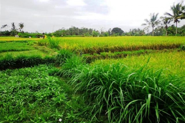land for sale in Ubud view small river and forest – TJUB103