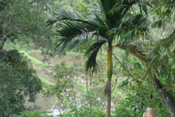 Land for sale in Ubud Next To villa – TJUB104