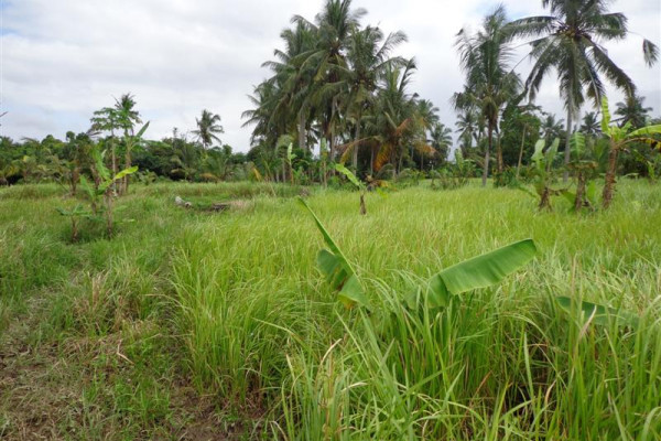 Land for sale in Ubud Very suitable for villa – TJUB106