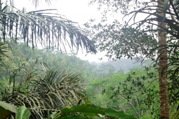 Nice cliff view land for sale in Ubud – TJUB110