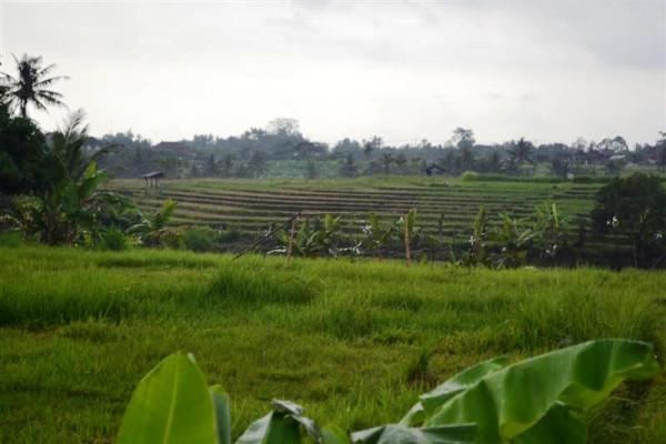 Stunning view rice fields Land for sale in Canggu Near berawa beach
