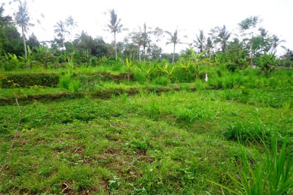 Amazing view rice paddy Land for sale in Ubud