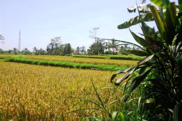 Land for sale in Ubud Payangan By the Ayung river