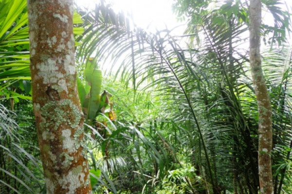 Beautiful View 30 are Land Sale in Ubud Tegalalang – TJUB134