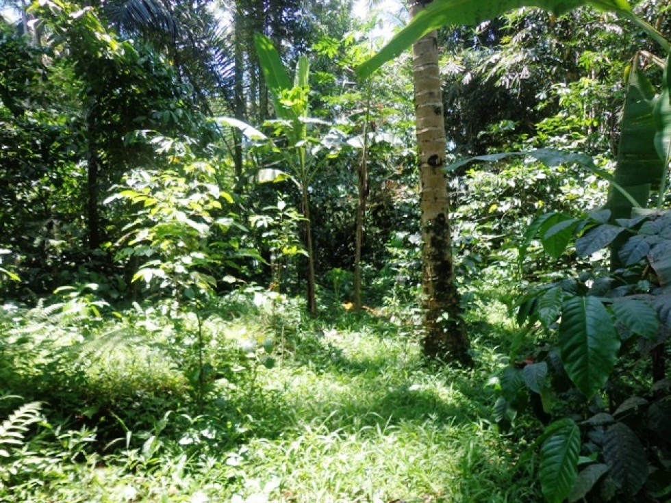 650 m2 Great natural view land for sale in Ubud – TJUB137