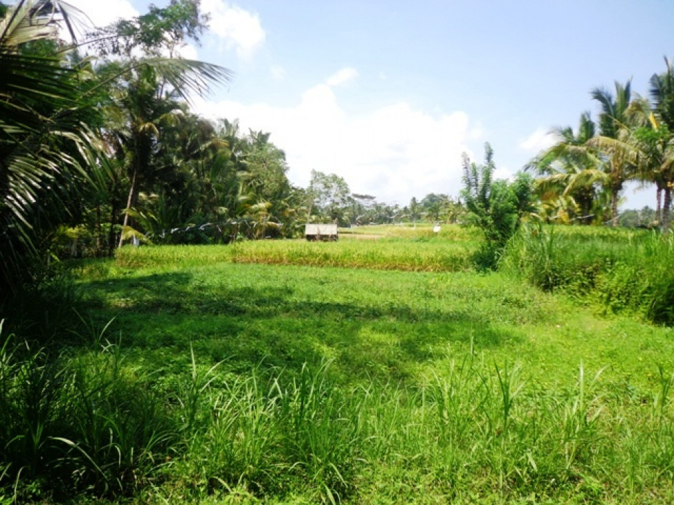 Amazing rice field and forest view land For Sale in Ubud – TJUB139