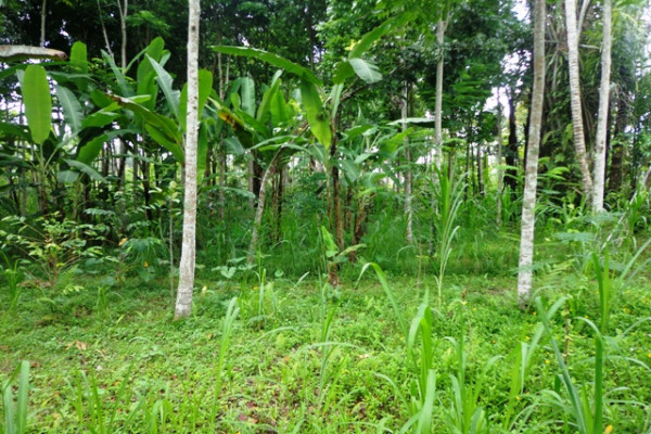 Magnificent view land for sale in Ubud Tegalalang – TJUB146