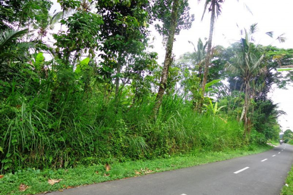 Land for sale in Ubud Tegalalang 2000 m2 by the roadside
