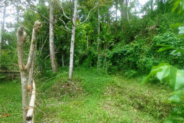 Land for sale in Ubud By the Roadside in Tampaksiring Ubud – TJUB153