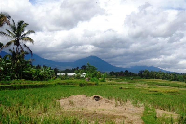 Rice fields land for sale in Tabanan with mountain view – LTB016