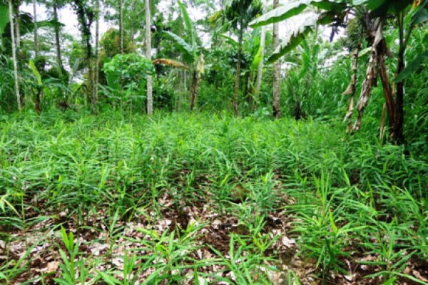 Land for sale in Ubud Bali by the roadside in Tegalalang – LUB157
