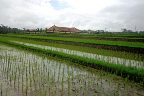 Land for sale in Ubud Bali with stunning paddy field view – LUB172