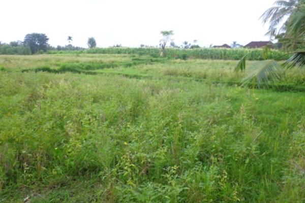 Land for sale in Ubud Bali near Monkey forest in Ubud Center – LUB174