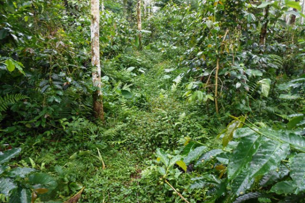Land for sale in Ubud Bali nice view in Ubud Tegalalang – LUB180