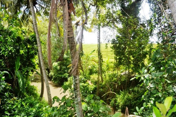 Land in Canggu for sale 8 Ares with Rice fields and river view