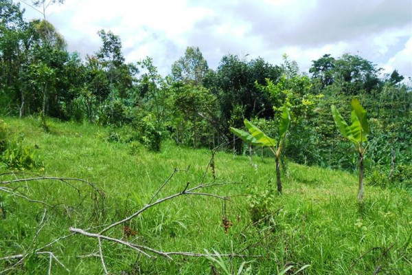 Affordable 3.000 m2 Land For sale in Ubud Bali