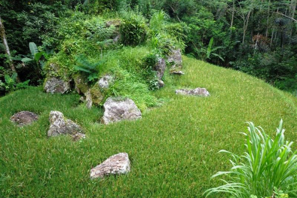 Land for sale in Ubud 20 Ares in Ubud Tegalalang Bali