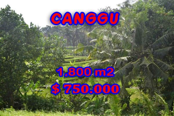 Land for sale in Bali, Extraordinary view in Canggu Bali – 1,800 sqm @ $ 417