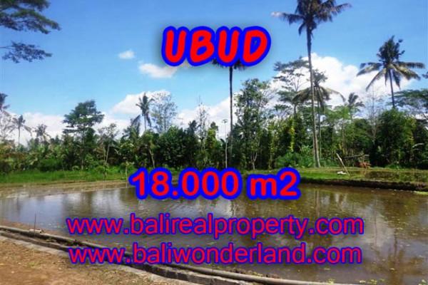 Terrific Property in Bali, Land for sale in Ubud Bali – 18,000 sqm @ $ 83