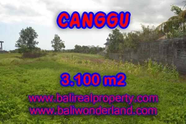 Amazing Property in Bali, Land for sale in Canggu Bali – 3,100 sqm @ $ 539