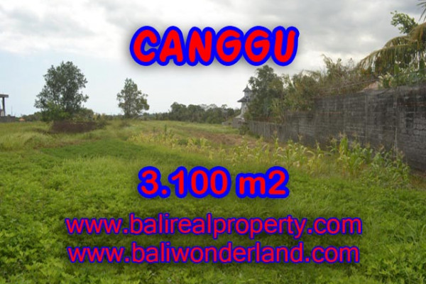 Exotic Property in Indonesia, Land for sale in Canggu Bali – 3,100 sqm @ $ 539