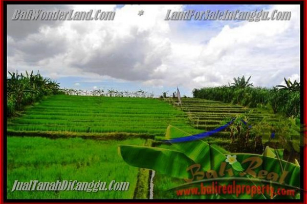 Exotic LAND IN Canggu Pererenan FOR SALE TJCG141