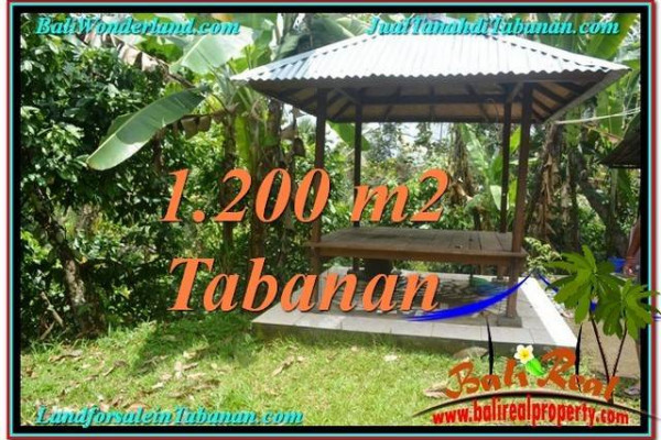 FOR SALE Magnificent LAND IN Tabanan Penebel BALI TJTB294