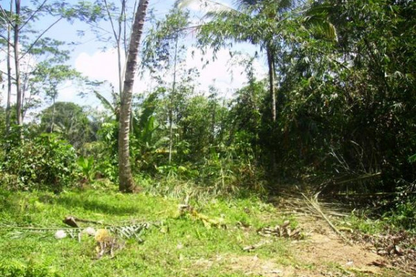 Land for sale in Ubud, 27 are in Tegalalang overlooking rice paddies TJUB076