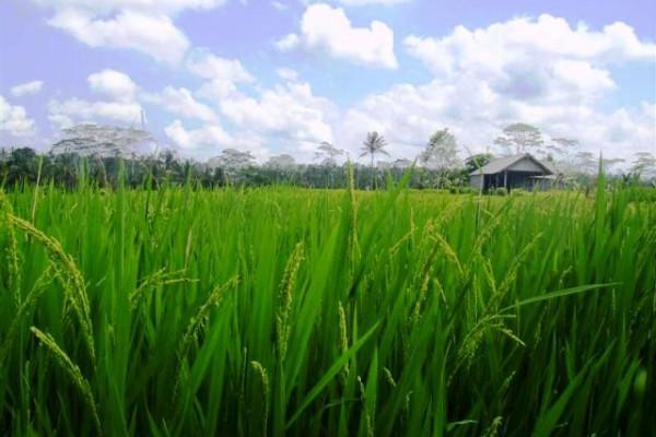 Land for sale in Ubud Tegalalang 1500 m2 – TJUB077