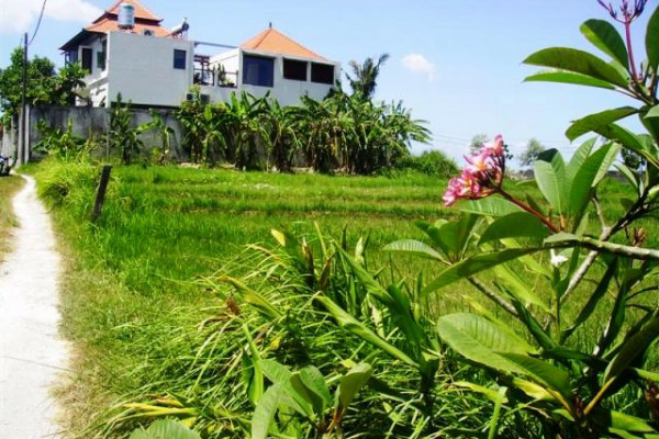 Land for sale in Canggu 15 are ( 1500 m2 ) in Brawa