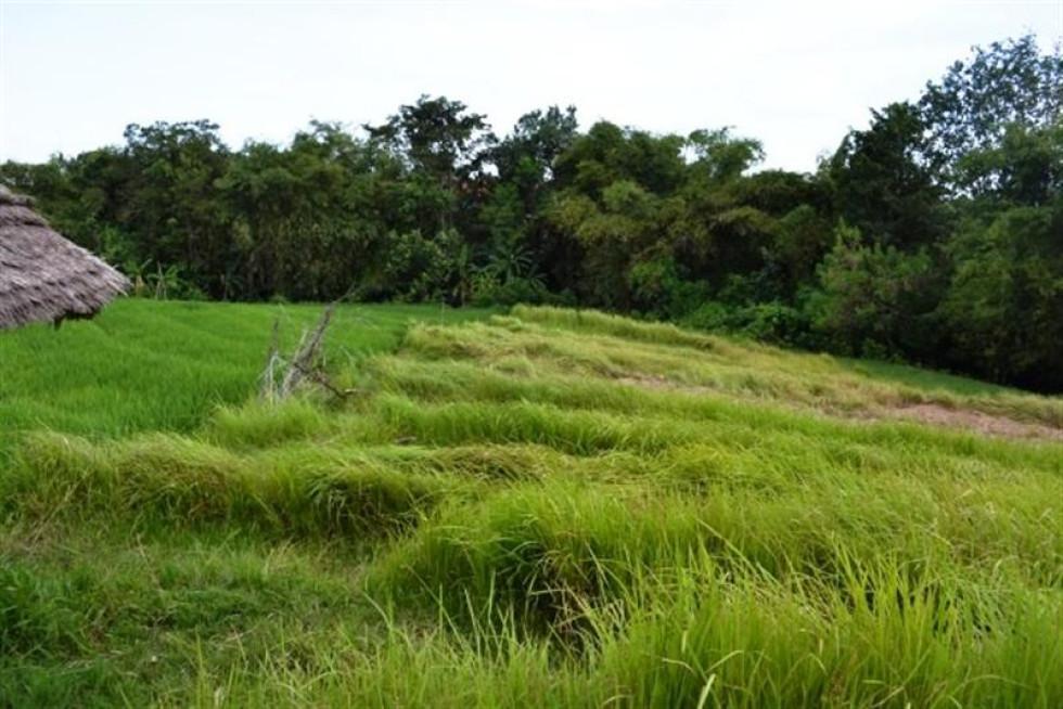 Land For Sale in Canggu Near Echo Beach – TJCG029