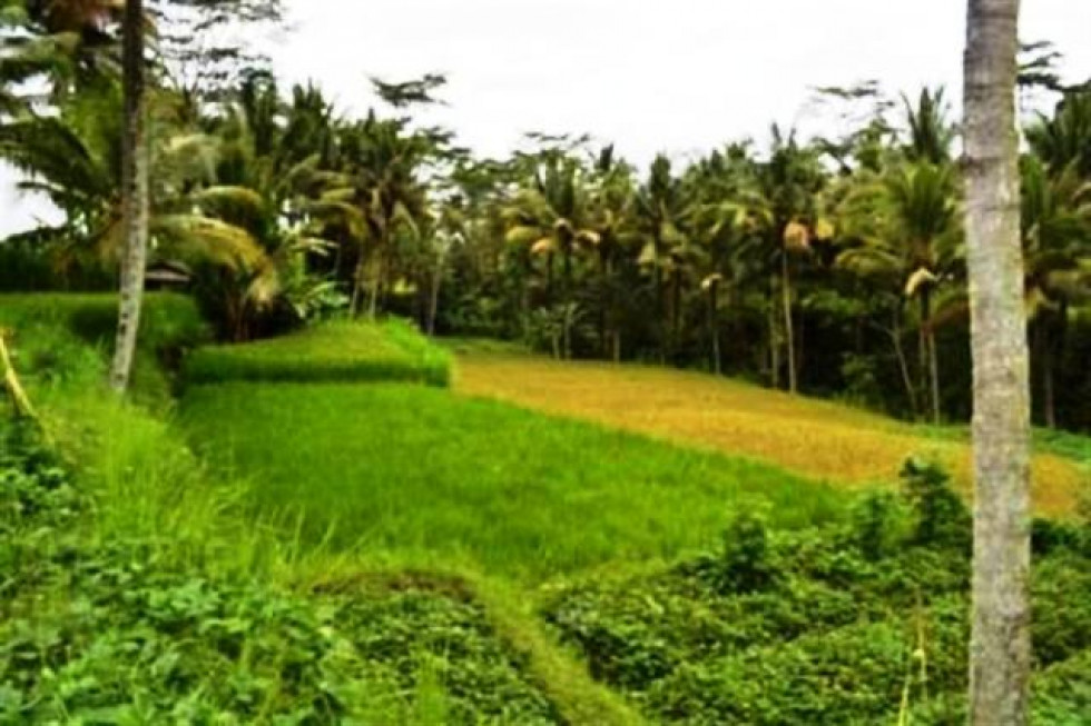 land for sale in Ubud, cagahan Bali – TJUB017