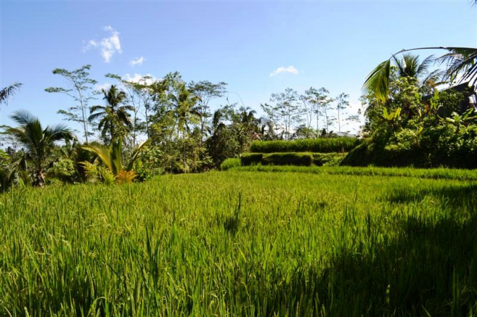 Land for sale in Ubud Tampaksiring, nice view near Presidential Pallace – TJUB004