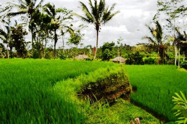 Land for sale in ubud Tegalalang with stunning view by the river – TJUB038