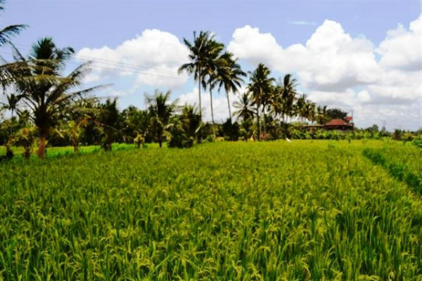 Land for sale in Ubud, rice field view – TJUB023