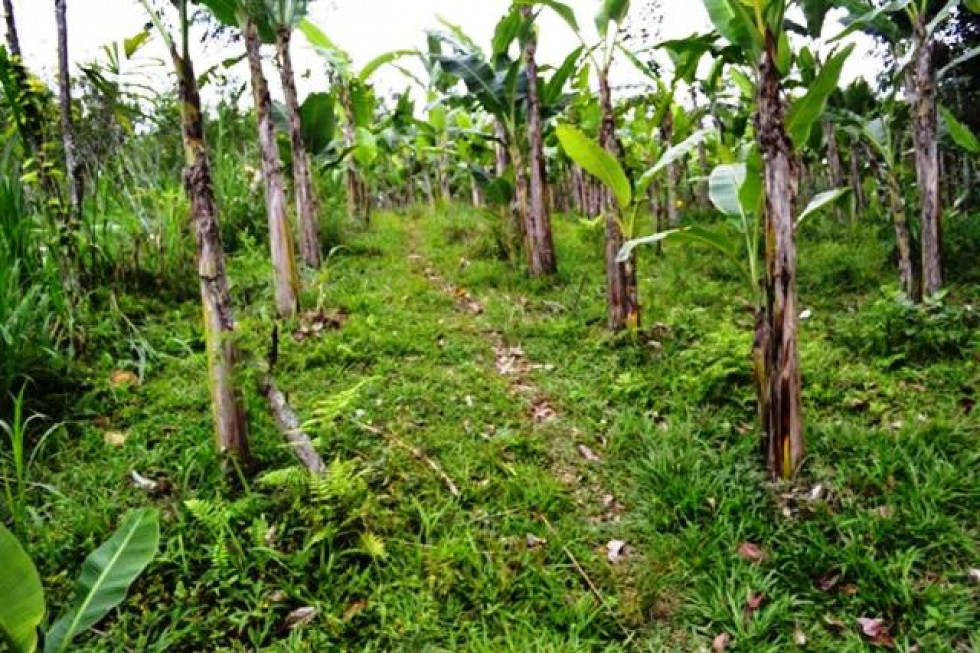 Land for sale in Ubud 143 Are in Pilan Ubud – TJUB013