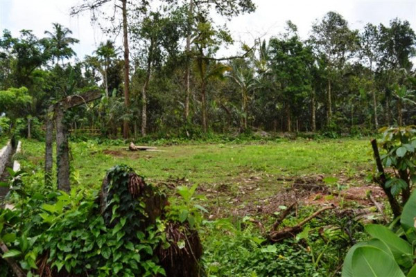 land for sale in Bedugul near Joger Luwus – TJBE005