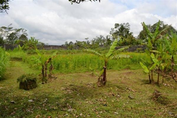roadside freehold land for sale in Bedugul – TJBE008