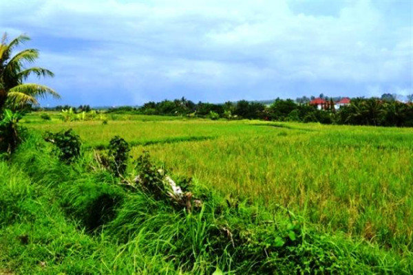 nice view 2700 sqm land for sale in Canggu – TJCG010