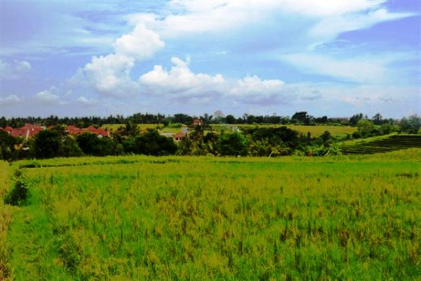 Terraced rice fields land for sale in Canggu – TJCG010